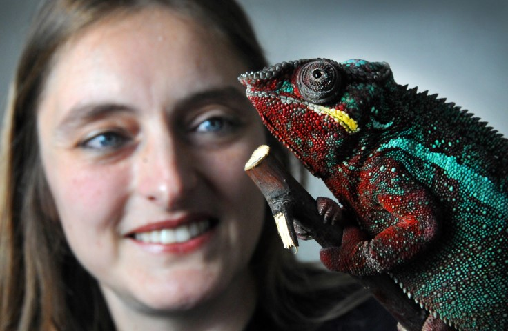 Business owner Helen Glenwright and Neil the chameleon