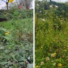 Pollinator Parks added to B-Line map